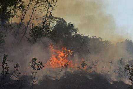 EL BRUTAL DESTROZO MEDIOAMBIENTAL EN LA JUNGLA DEL AMAZONAS